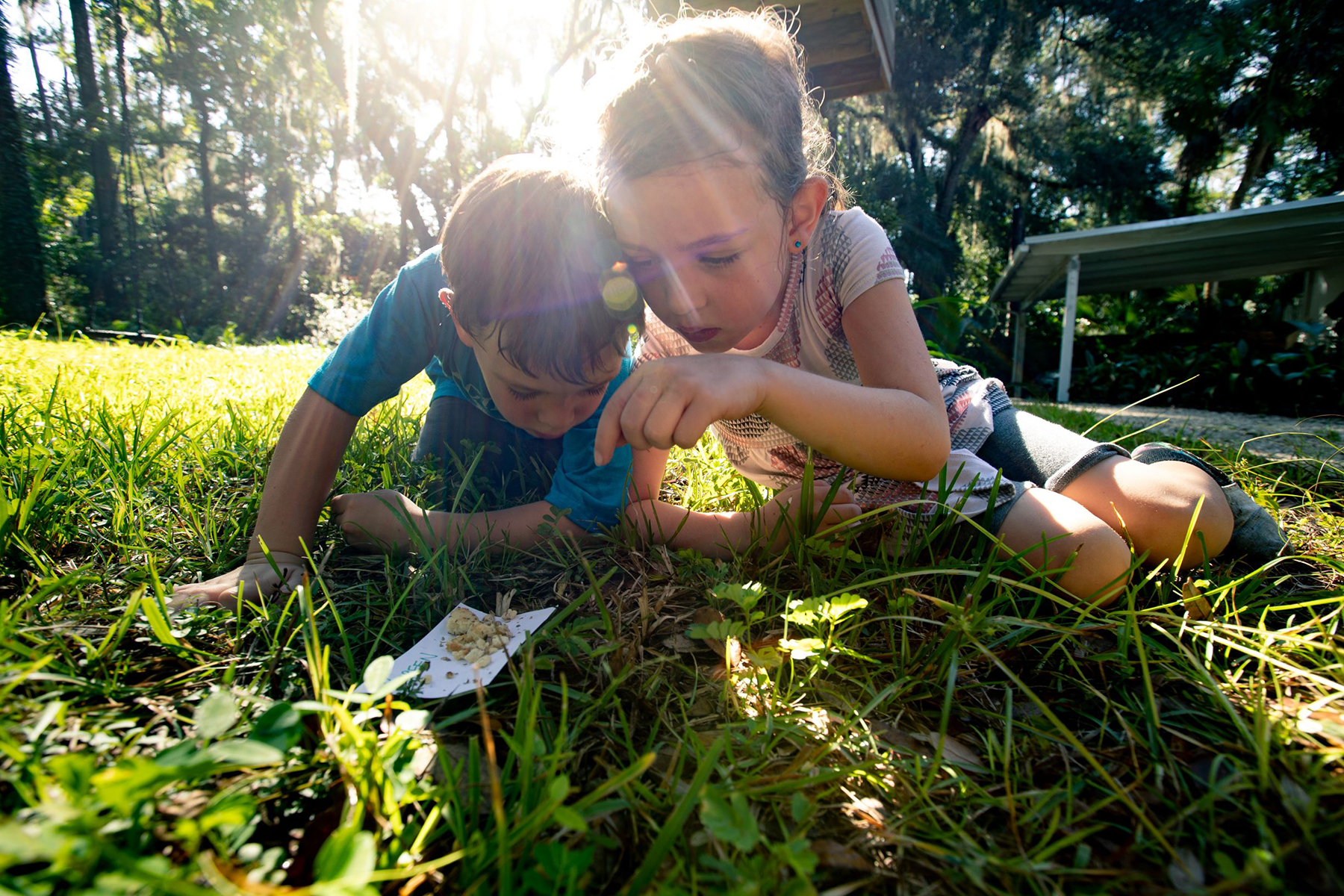 Kids sampling ants